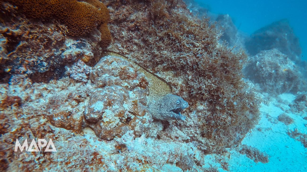 Moreia em Arraial do Cabo