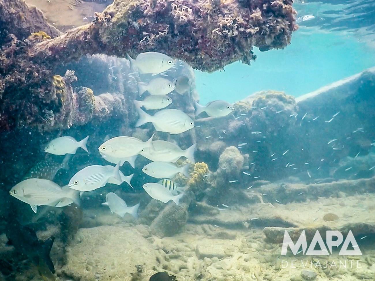 Snorkeling em Dry Tortuga Key West