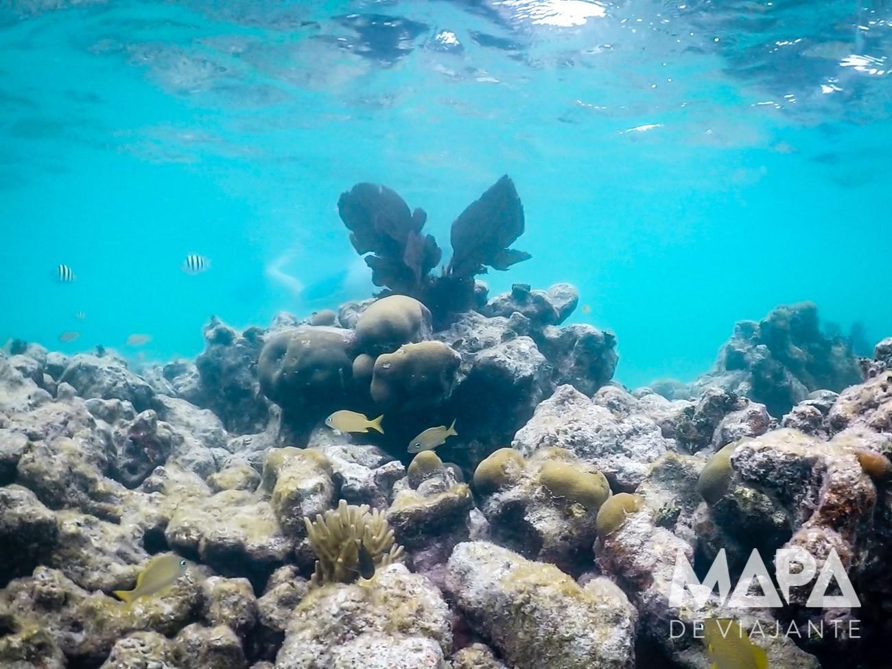 Snorkeling em Key West