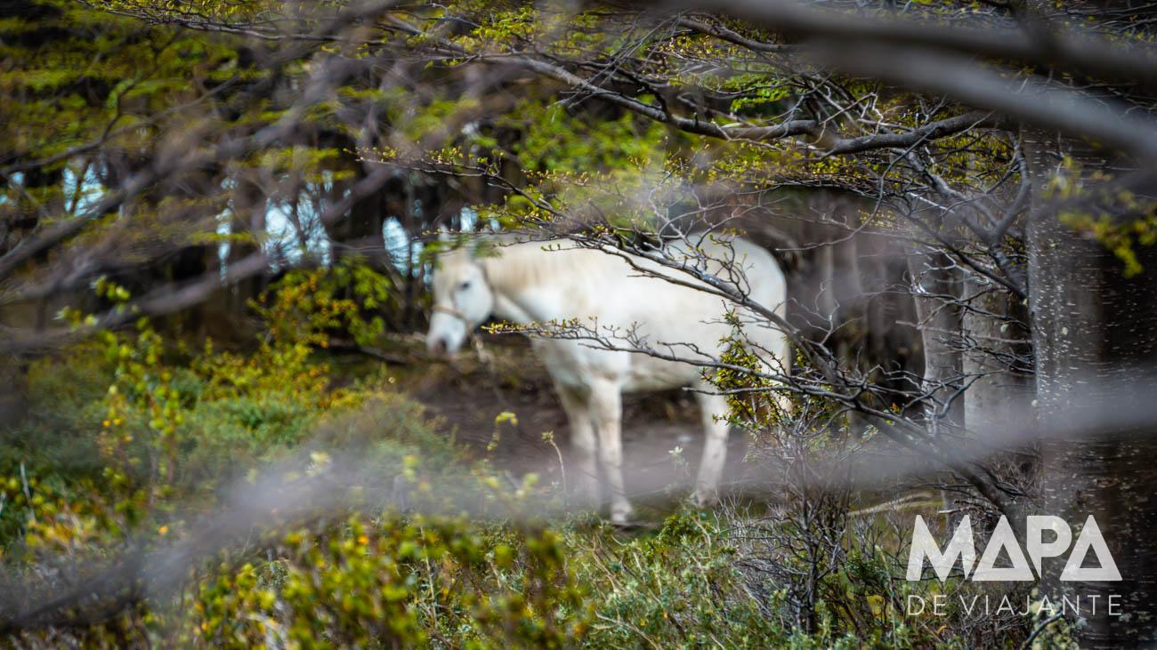 Cavalo em Torres del Paine