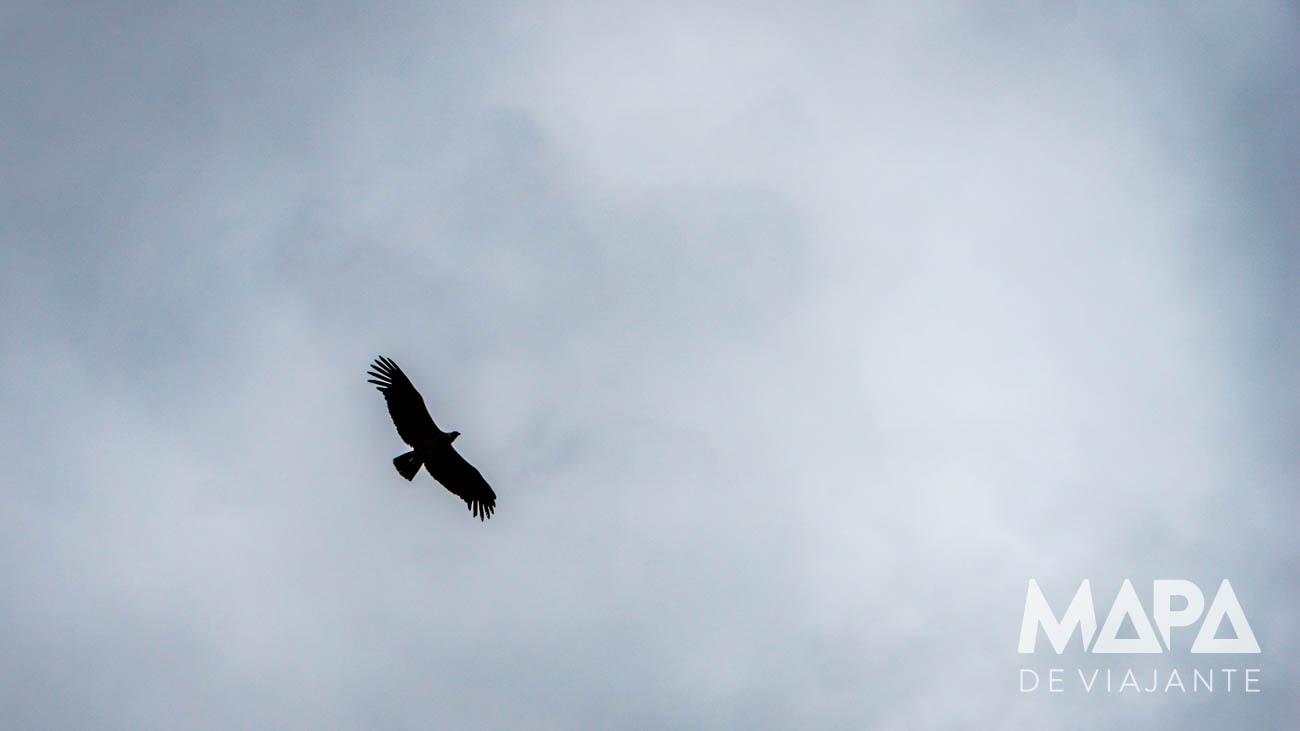 Condor em Torres del Paine