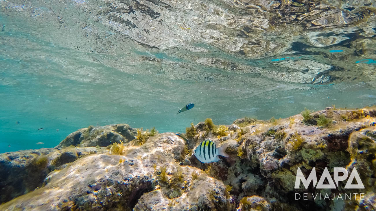Snorkel em El Acuario San Andrés