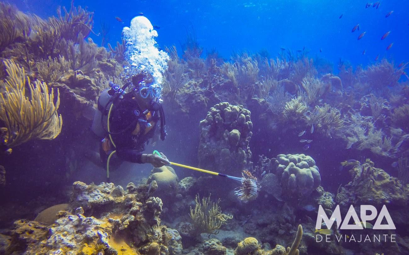 Peixe palhaço é uma ameaça a fauna caribenha