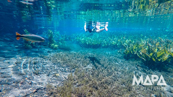 Dicas de Roteiro Bonito: Aquário Natural em Bonito / MS
