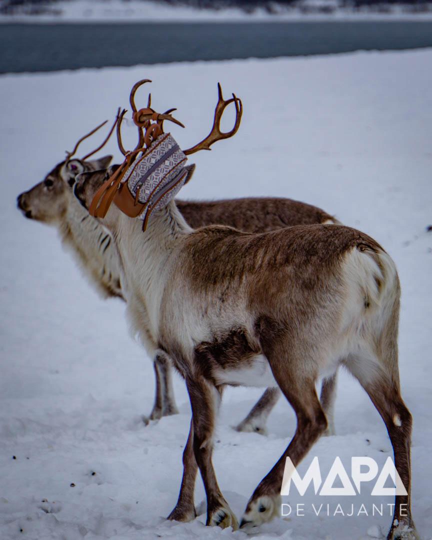 Cultura Sami e Renas na Noruega