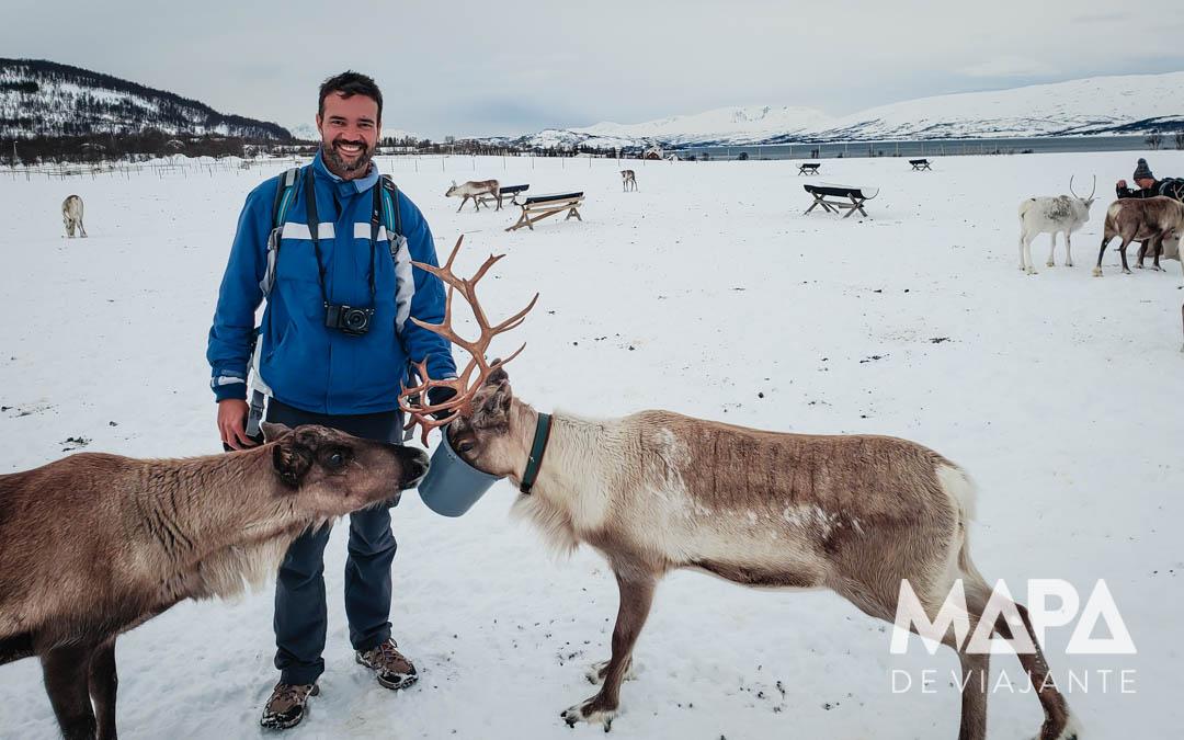 O que fazer em Tromso: Passeio com Renas