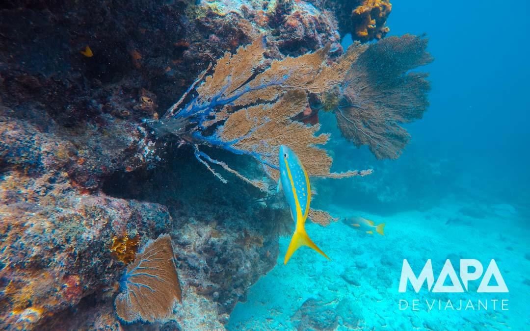 Mergulho Florida Keys Pennekamp O que fazer