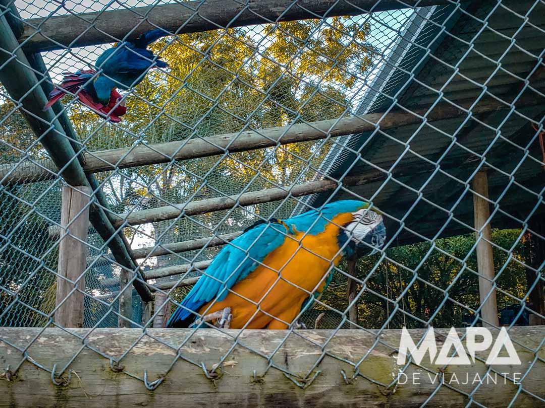 Viveiro de pássaros Cia Aventura Nova Roma